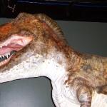 ビショップ博物館で特別展「恐竜がやって来る」開催中